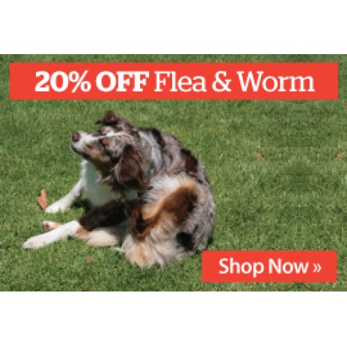 What Is The Best Flea And Worm Medicine For Dogs
